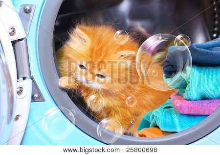 Red kitten and soap bubbles in open washing machine.
