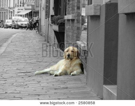 Solitary Dog On Sidewalk