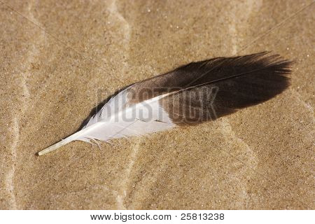 Beach Feather