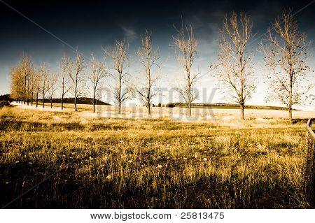 Atmospheric Vibrant And Dark Farming Landscape