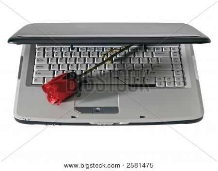 Laptop And Red Rose, Isolated