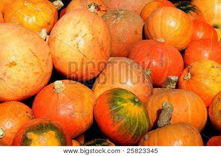 orange pumpkins as wholesome vegetable