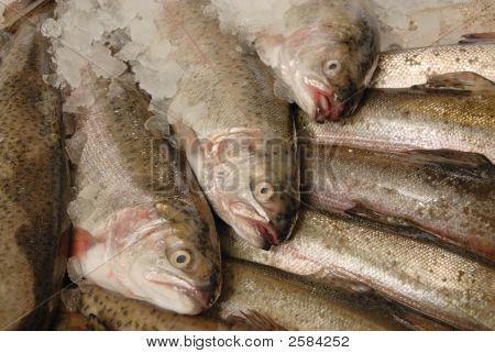 Trucha en losa de Pescadero