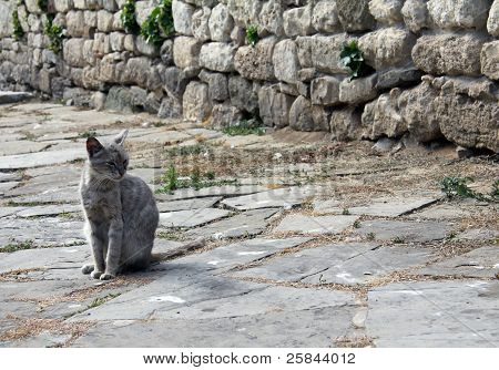 cat in the old town