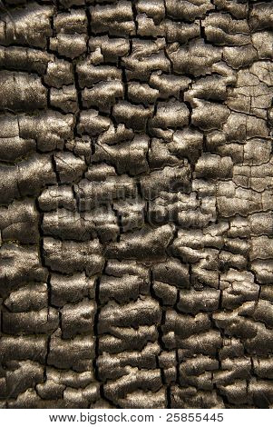 Burnt bark