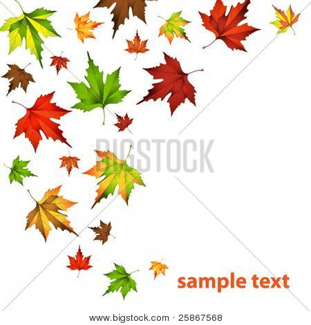vector illustration of Autumn leaf fall