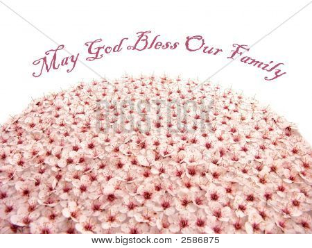 Peach Plum Flower Globe (May God Bless Your Family)