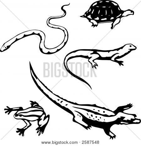 Reptile_Amphibian