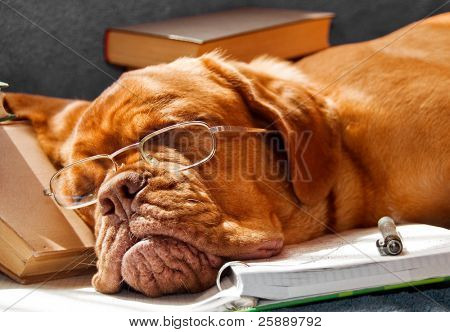 Dog Fell Asleep while doing her homework