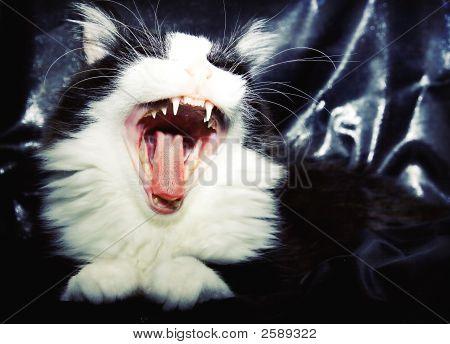 Roaring Cat