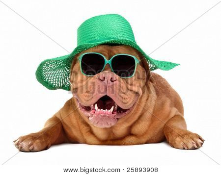 Dog wearing green straw hat and sun glasses, isolated