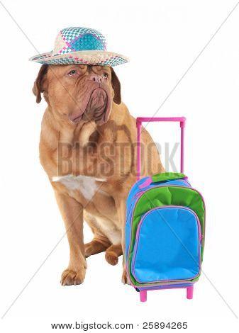 Pet travel concept, studio shot