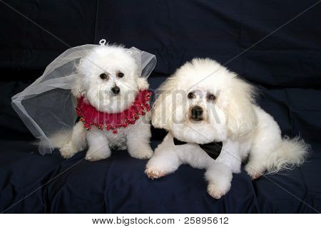 Fifi and Beau both