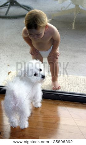 "my grandson meets our bichon frise ""Fifi"" for the first time through the screen door"