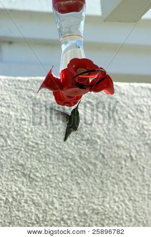 ein Kolibri kommt in für etwas zu essen an einem Zubringer