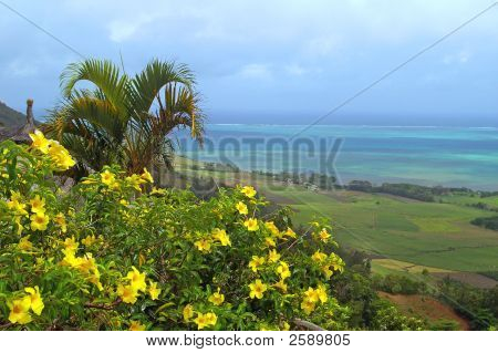 Tropical Palm Tree And Flowers Against Sky Ocean Background