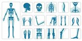 Human Bones Orthopedic And Skeleton Icon Set On White Background, Bone X-ray Image Of Human Joints,  poster