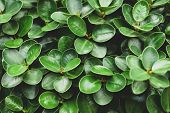 Green Leaf Background Nature Design Texture Pattern Copy Spec Abundance Backgrounds Beauty In Nature poster