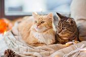 pets, christmas and hygge concept - two cats lying on window sill with blanket at home poster