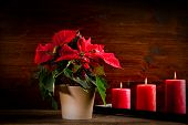 stock photo of poinsettias  - photo of beautiful poinsettia plan on wooden table illuminated by spot - JPG