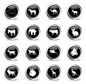 Mammals Web Icons - Black Round Chrome Buttons poster