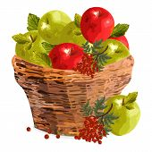 Apples Watercolor Basket Vector Illustration. Red And Green Apples In A Wooden Basket. Fall Season T poster