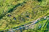 Fallen Trees Near A Dirt Road In Kursk Region Of Russia. Top-down View poster