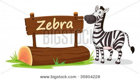 illustration of zebra on a white background