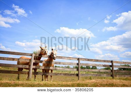 Two horses next fence on farm, beautiful countryside