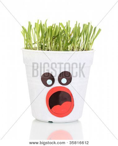 A pot of grass isolated on white