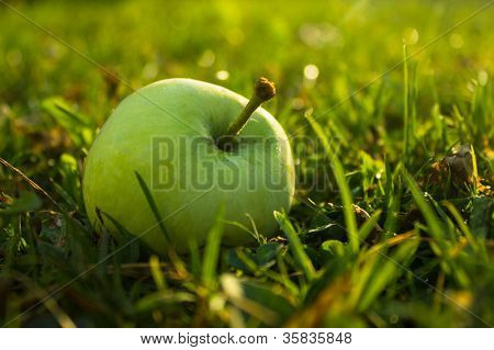 Apple In Sunlight
