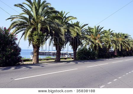 Southern palm trees