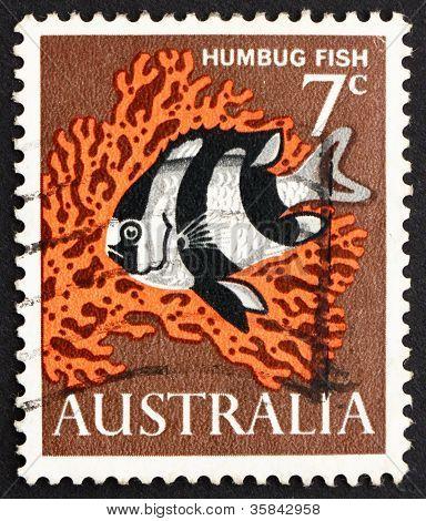 Postage stamp Australia 1966 Humbug Fish, Saltwater Fish