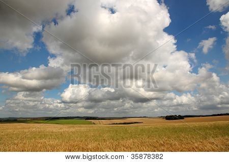 Cornfields and clouds
