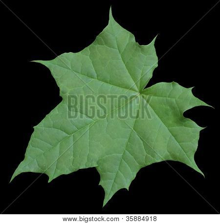 Green Leaf In Black Back