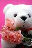 image of teddy-bear  - white teddy bear with 3 pink roses - JPG