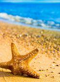 foto of starlet  - Fallen Star Sea Starlet - JPG