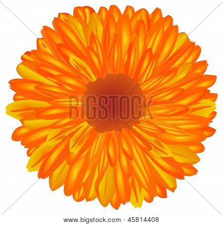 Yellow-orange Flower.
