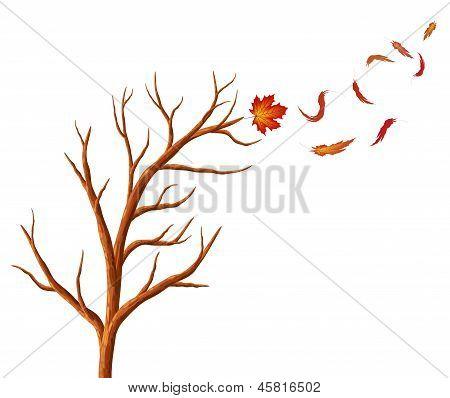 Abstract  Autumn Tree.