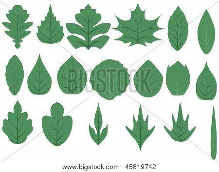 Green Tree Leaves.