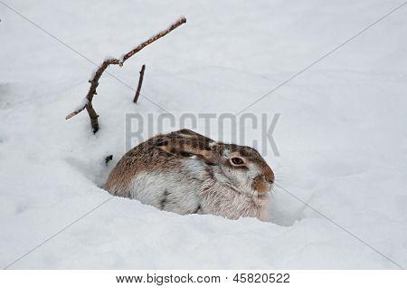 Ausblenden von Hase
