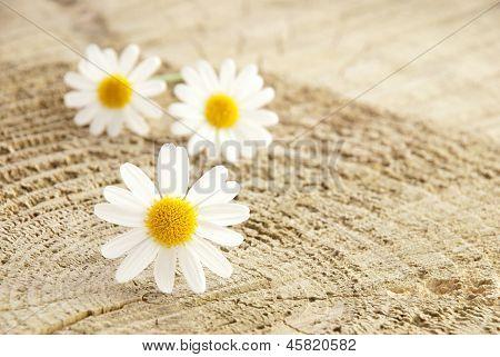 Three Blossoms