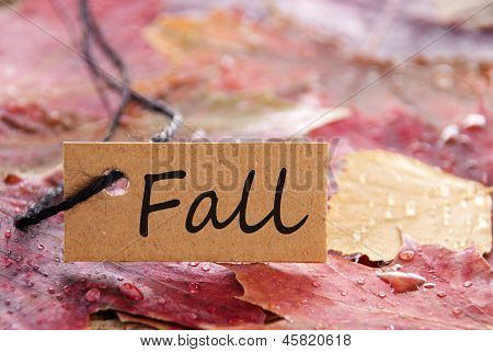 Label With Fall On It