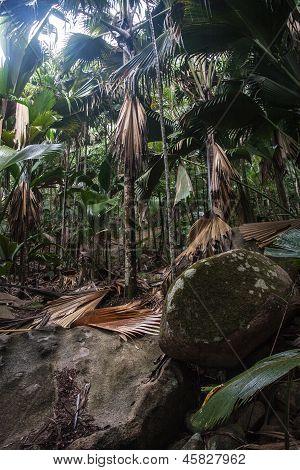 Valley De Mai Unesco Praslin In Seychelles