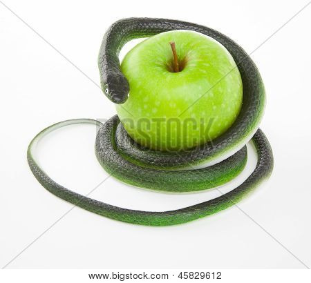Snake Coiling Around An Apple On A White