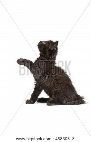 Cute Black Kitten On  A White Background