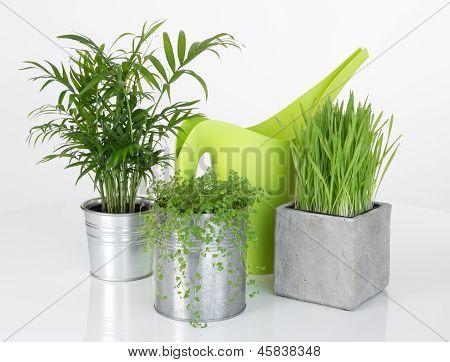 Hermosas plantas y regadera verde