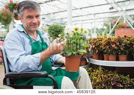 Gardne center worker in a wheelchair holding a flower pot in a greenhouse