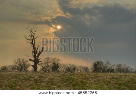 Wintry landscape with dead tree
