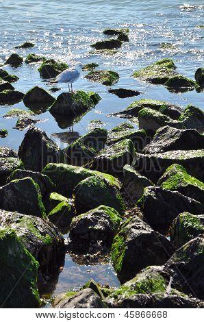 Rubble mound breakwater